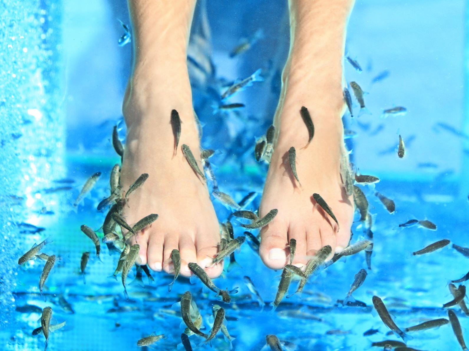 fiskpedikyr göteborg